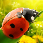 What can you see in summer? Why do ladybirds have spots?